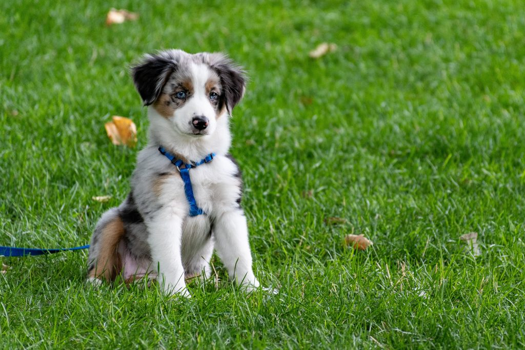Leash Walking Essentials - A Guide to Dog Walking Tools