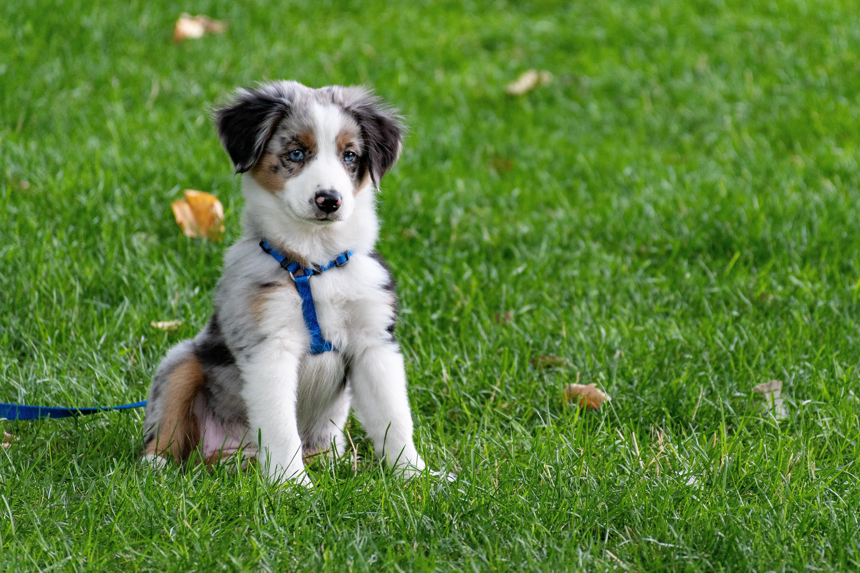 adorable-animal-canine-1322182