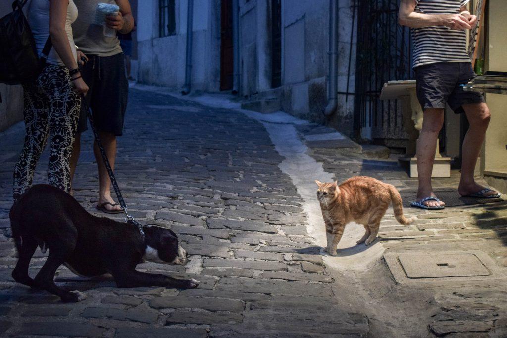 dog on leash stalking orange tabby cat in alleyway